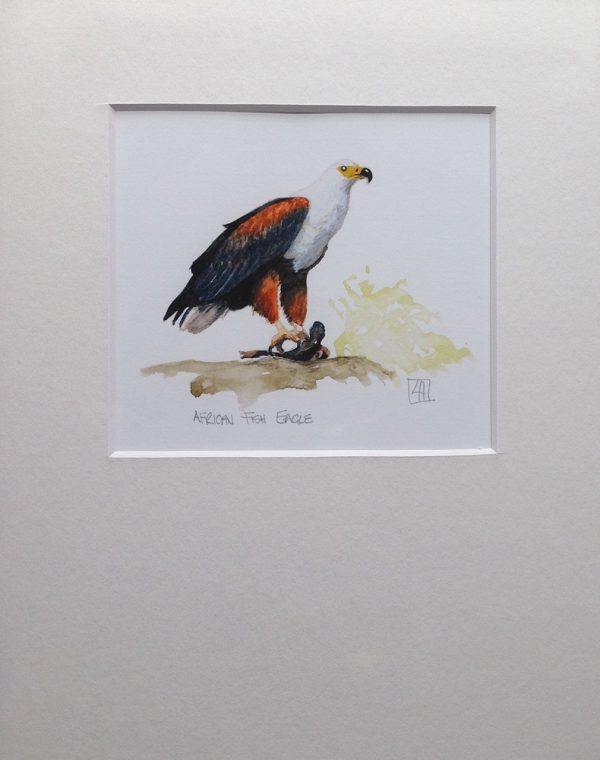01 African Fish Eagle
