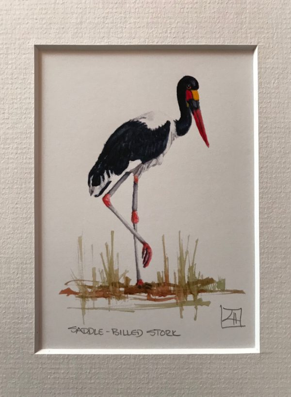 01 Saddle-billed Stork