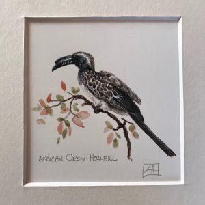 02 African grey Hornbill