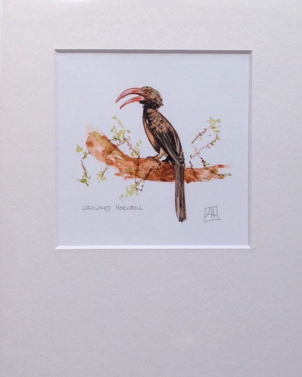 02 Crowned Hornbill