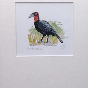 02 Ground Hornbill