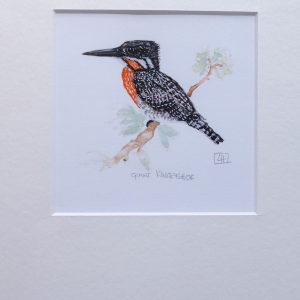 03 Giant Kingfisher