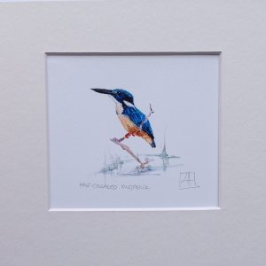 03 Kingfisher pair