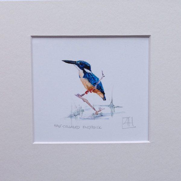 03 Kingfisher pair
