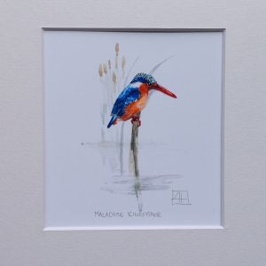 03 Malechite Kingfisher