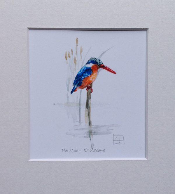 03 Malechite Kingfisher