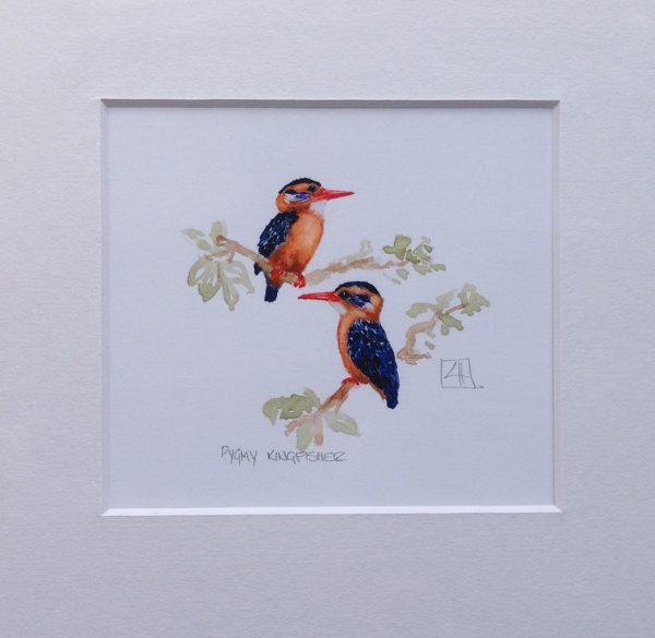 03 Pygmie Kingfisher