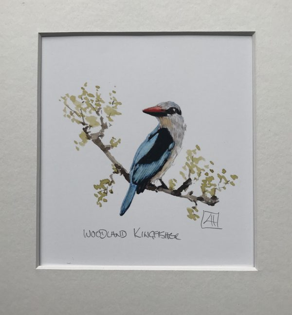 03 Woodland Kingfisher