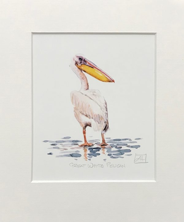 04 Great White Pelican