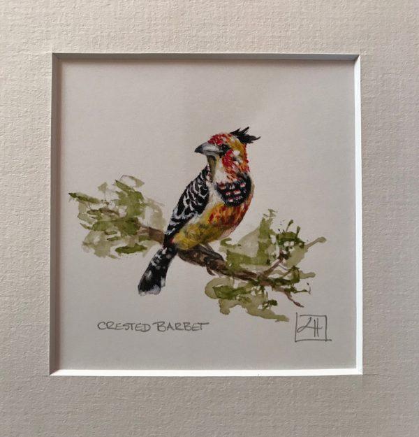 05 Crested Barbet