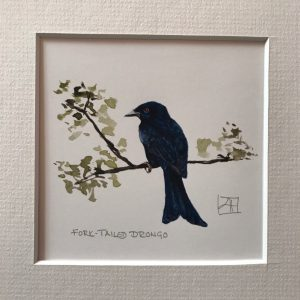 05 Fork-tailed Drongo