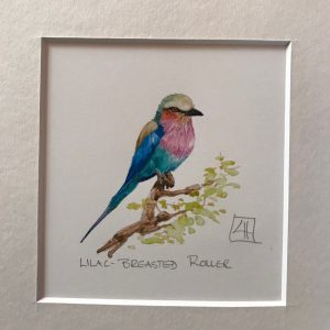 05 Lilac-breasted Roller