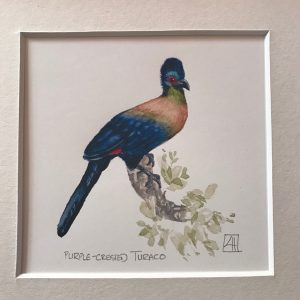 05 Purple-crested Turaco