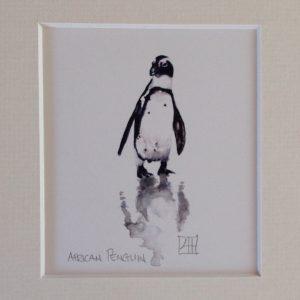 06 African Penguin 1