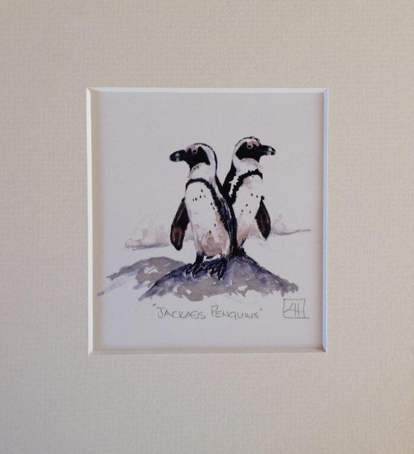 06 Jackass Penguin