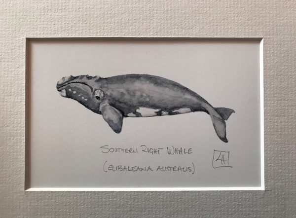 07 Souther Right Whale