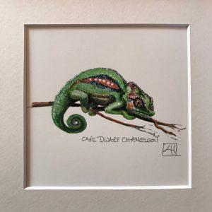 08 Dwarf Chameleon sitting