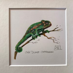 08 Dwarf chameleon walking