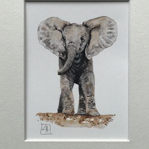 09 Baby Elephant