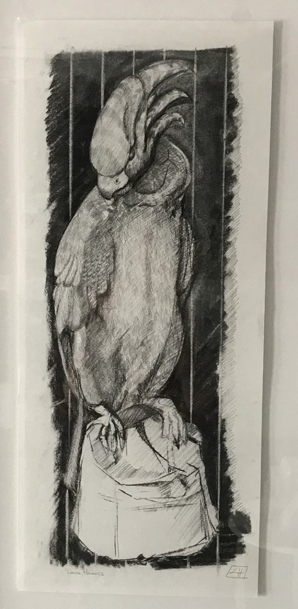 Drawing 'Don't Mess with the Parrot', pencil and charcoal on paper 34x73cm by Louise Hennigs