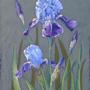 Pastel Painting 'Blue Iris' on paper 61x47.5cm by Louise Hennigs