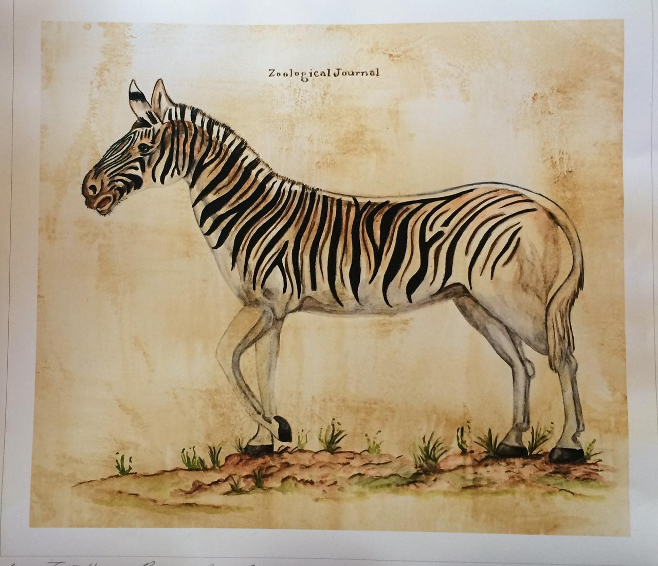 Shamwari-Riverdene guest rooms -Vintage Zebra illustration for KM2K Design by Louise Hennigs
